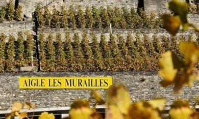 Badoux Vins - Vineyard - les Murailles
