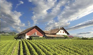 Domaine du Martheray - Vineyard