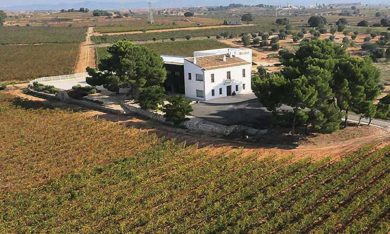 Bodegas Hispano Suizas Vignoble