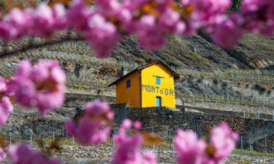 Domaine du Mont d'Or - Terrasses